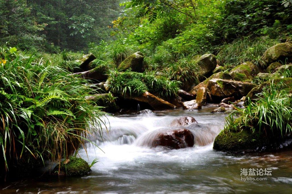 金鞭溪溪水.jpg