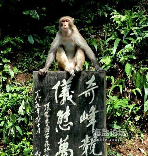 小猕猴.jpg