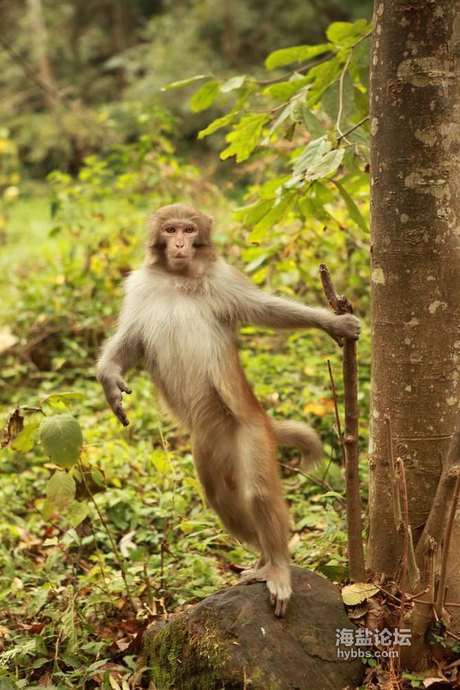 3金鞭溪猴子.jpg