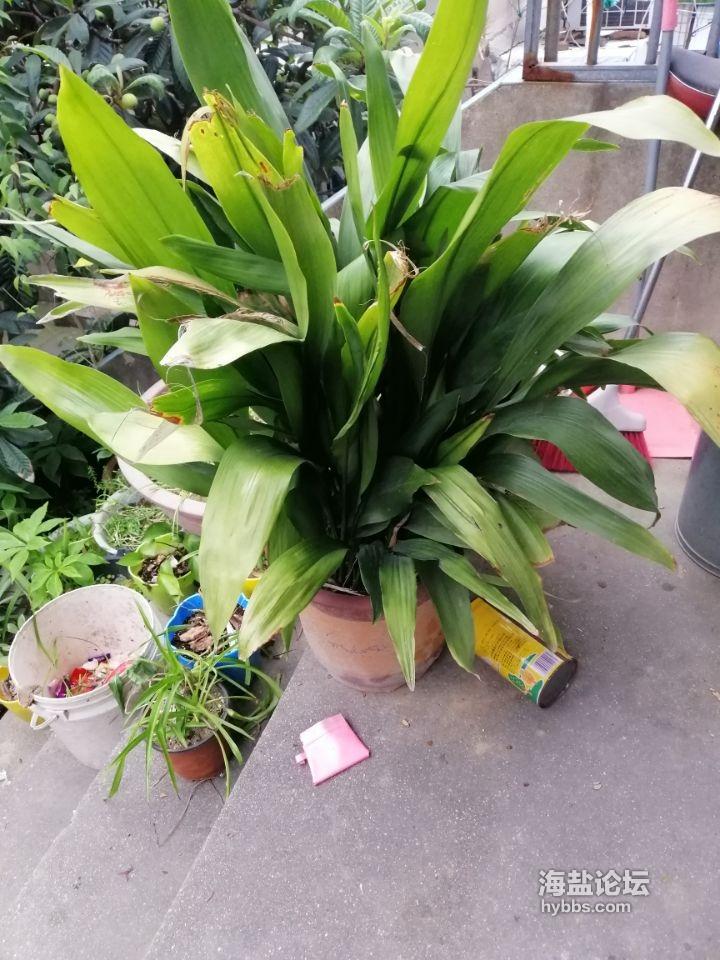 花卉150元,带盆